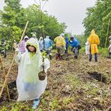 子どもたちとブナ植林を実施
