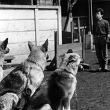 盲導犬:歩くという自立