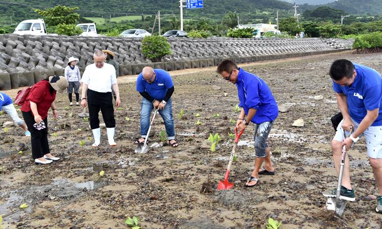 石垣島の名蔵湾でマングローブを植樹