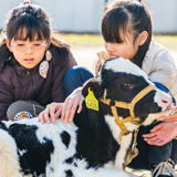 視覚支援学校で特別な体験ふれあい動物園