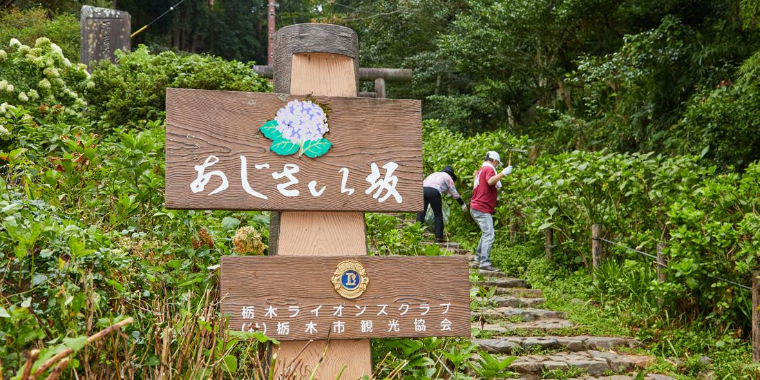 クラブの作った観光地 あじさい坂景観保全活動