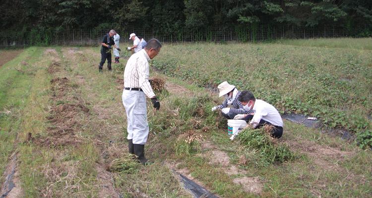 楽しくておいしい落花生の栽培・収穫事業