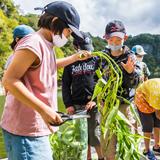 アオコを抑制し水質改善 神龍湖で空心菜の栽培