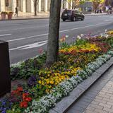 福岡の大通りに花で癒やしを