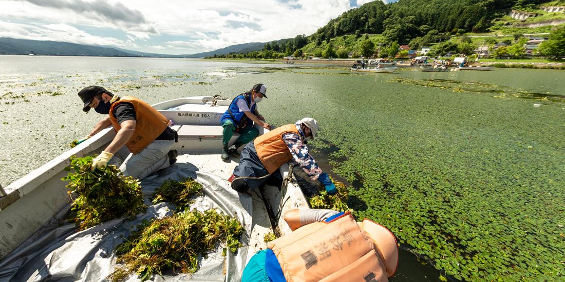 きれいな湖を次世代に 諏訪湖ヒシ除去作業